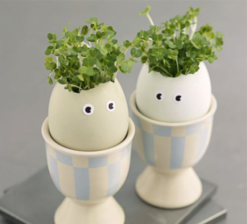 3 Egg Cress Heads
